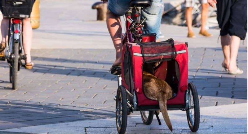 Best Dog Bicycle Trailers