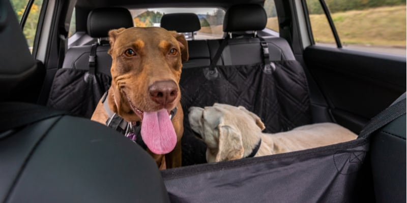 In this guide, we compared the best car seat protectors for dog owners, we compare quality, fit as well as value for money.