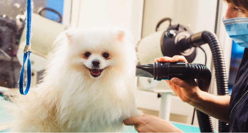 Best dog hair dryer reviews