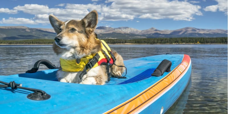 Although many dogs are really good at swimming there are cases when you might want to consider a dog life jacket. This could be down to the breed and more.