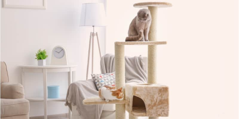 Some of the best cat trees we could find you can buy today