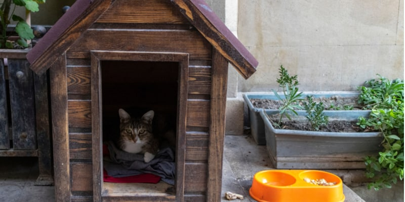Comparison of the best cat houses for outside
