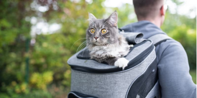Comparing the best cat backpacks for taking your cat on trips with you.