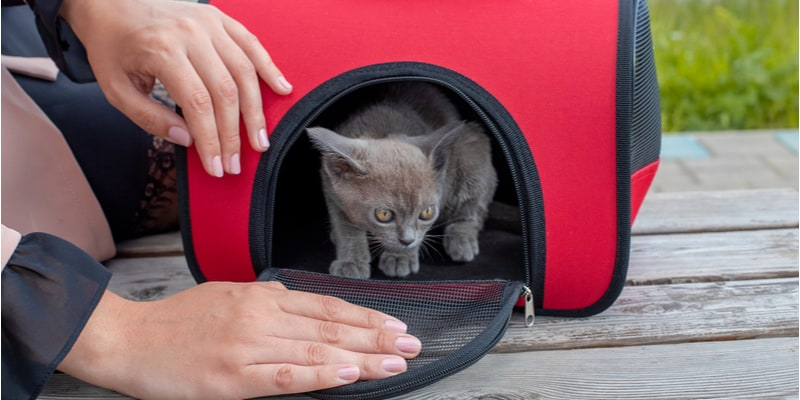 Cat carrier comparison and reviews