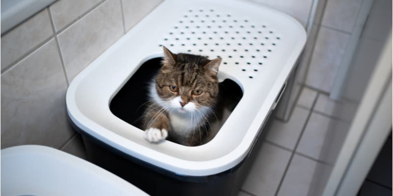 No one likes dealing with a cat litter tray and having a cat myself I set out to find the best cat litter trays that are easy to clean, somewhat automatic