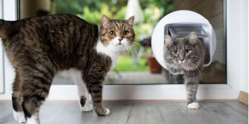 Best microchip cat flap comparison and reviews