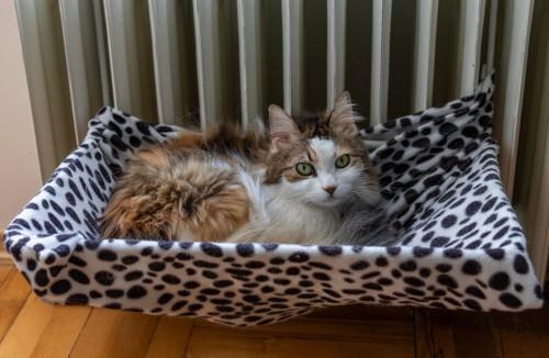 Cat in radiator cat bed