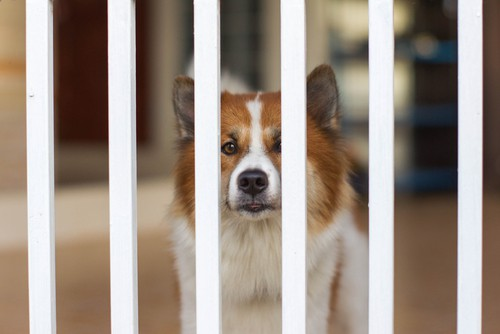 Metal dog gate