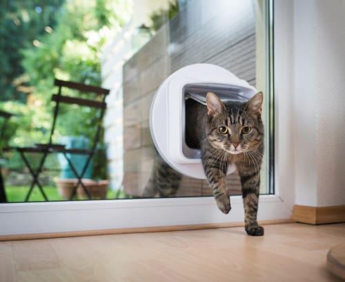 Microchip cat flap installed in glass door
