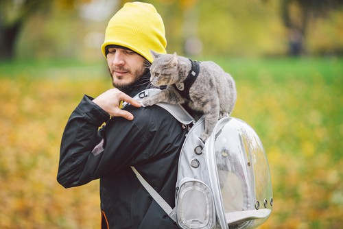Best cat backpacks being used on hiking trip