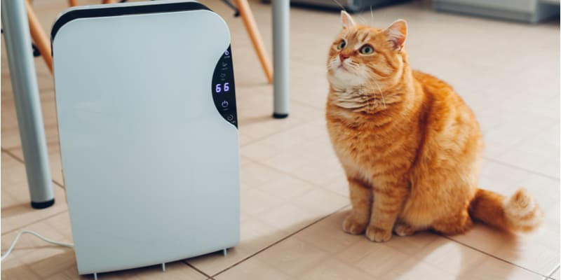 Best air purifier for pets and comparison between the top 6 models.