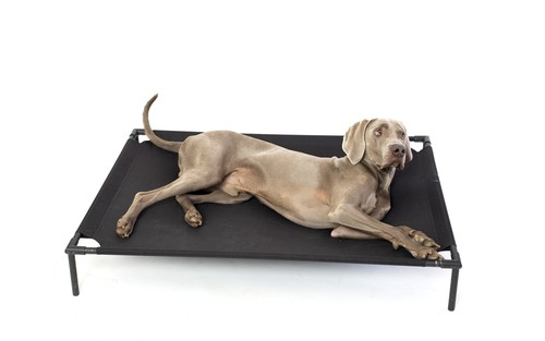 A raised dog beds which are great for keeping cool in summer and warm in winter