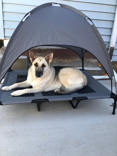 Raised dog bed with canopy