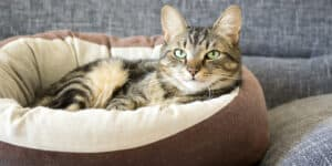 Best Heated Cat Bed Comparison