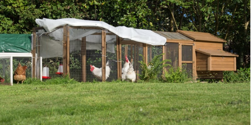 Best chicken coop and runs compared and reviewed