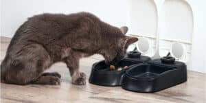 Best Automatic Cat Feeder Reviews with comparisons