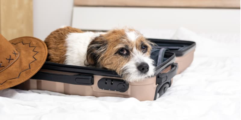 Best Dog Travel Beds and comparisons