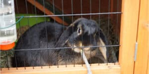 Comparison of the best rabbit hutches including both traditional wood and plastic hutches with and without runs