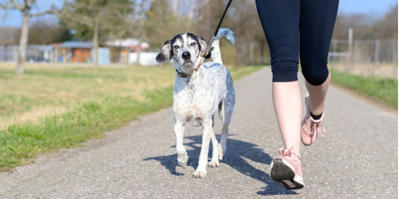 Best dog leads for running with comparisons and reviews