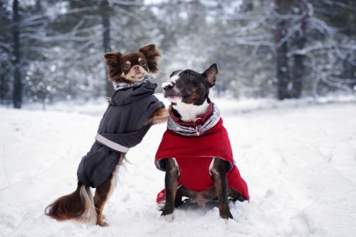 Winter dog coats being compared