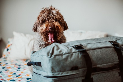 dog travel bed packed and ready to travel with