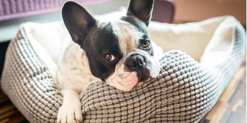 Do dogs need a bed, everything you need to know