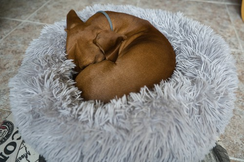 Donut dog bed which help keep your dog feeling safe