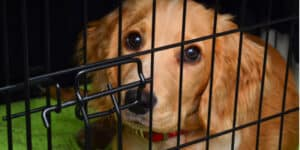 Some of the best dog crates for cocker spaniel taking into consideration size and build quality