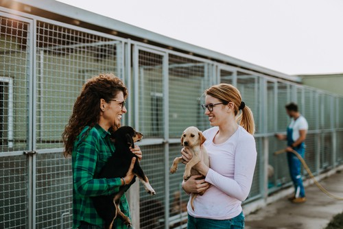 Animal shelter and talking to the shelter about the dog