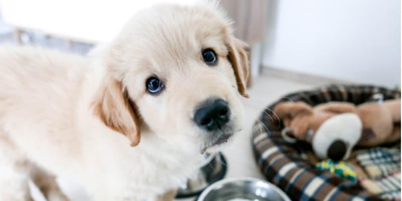 Best Puppy Starter Kits