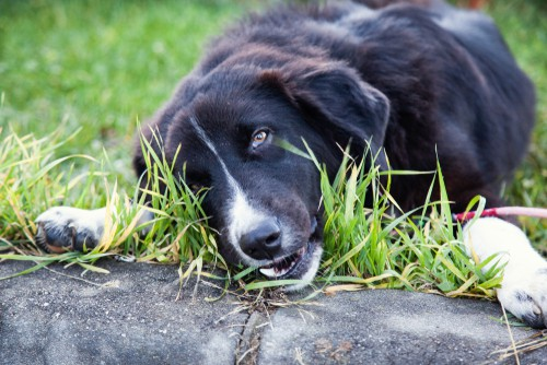 Dog eating grass in the park