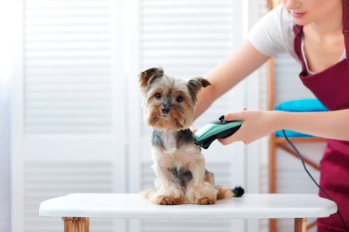 Grooming puppy
