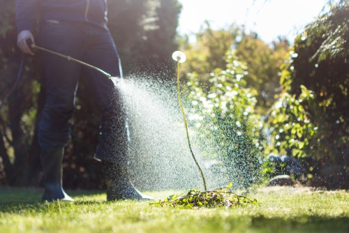 Spraying weeds in the garden can make dogs ill if they eat the grass or weeds that have treated