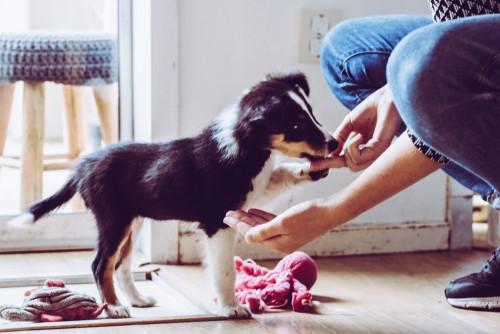 Training puppy